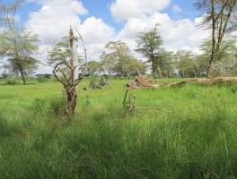ESR 4: Long-term ecosystem dynamics and societal interactions in the Amboseli and Mau ecosystems from swamp sediments