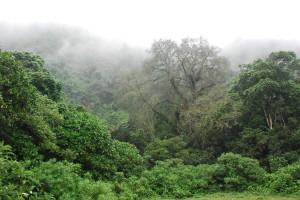 Arusha National Park, northern Tanzania, Africa
