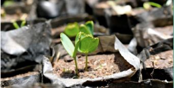 Trees and more: Bridging the gap between science and industry