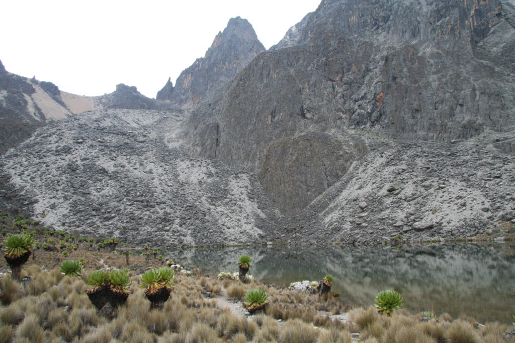New pollen record from alpine Mt Kenya